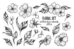 Vector illustrations - Floral set (flowers, leaves and berries). 20 hand drawn elements. Tattoo Royalty Free Stock Photography