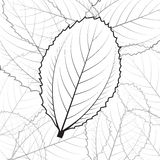 Vector illustrations leaves Stock Photo