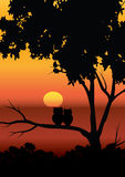 Vector illustrations , The Owl and the beautiful sunsets. Stock Image