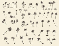 Vector Illustrations Silhouette Palm Trees Sketch Stock Images