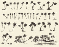 Vector Illustrations Silhouette Palm Trees Sketch. Vector illustrations silhouette of palm trees hand drawn sketch forty pieces royalty free illustration