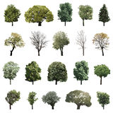 Vector illustrations trees royalty free illustration
