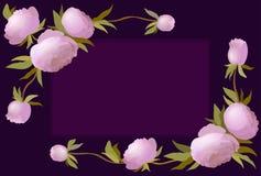 Vector Illustrationsblumengrenze mit Pfingstrose für Einladungen und Glückwunschkarten Lizenzfreie Stockfotografie