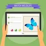 Vector Illustrationskonzept von den Händen, die moderne digitale Tablette halten und auf Schirm mit Website über wild lebende Tie Lizenzfreies Stockbild