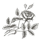Vector Illustrationsskizze von rosafarbenen Blüten auf einem weißen backgroun stock abbildung