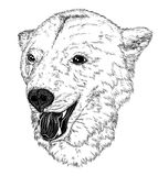 Vector Illustrative portrait of bear Royalty Free Stock Photos