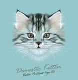 Vector Illustrative Portrait of Domestic Kitten Stock Photos