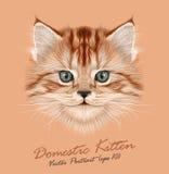 Vector Illustrative Portrait of Domestic Kitten Stock Image