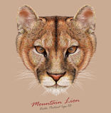 Vector illustrative Portrait of Mountain Lion Stock Photo