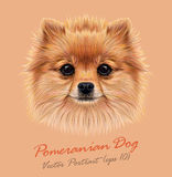 Vector Illustrative Portrait of Pom Pom Royalty Free Stock Images