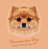 Vector Illustrative Portrait of Pom Pom. Cute head of a sable Pomeranian Spitz Dog Royalty Free Stock Images