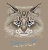 Vector illustrative Portrait of Siberian Cat Stock Photo
