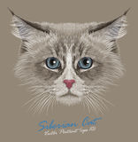 Vector Illustrative Portrait of Siberian Cat Stock Image