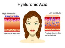Vector a ilustração com ácido hialurónico em produtos dos cuidados com a pele Baixo - molecular e alto - molecular Isolado ilustração do vetor