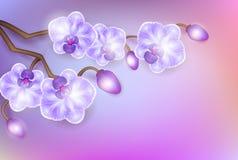 Vector a ilustração com as orquídeas elegantes do vintage lilás claro realístico em um fundo claro Fotografia de Stock Royalty Free