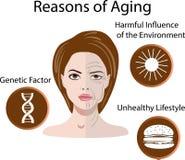 Vector a ilustração com as razões do envelhecimento, isoladas ilustração stock