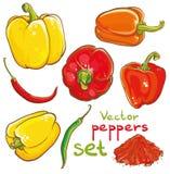 Vector a ilustração das pimentas, das pimentas de pimentão, da pimenta de Caiena e da especiaria Imagens de Stock Royalty Free
