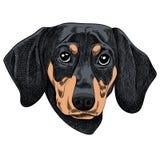 Vector a ilustração de um cão do bassê para um cartão de Natal Feliz Natal no ano do cão ilustração royalty free