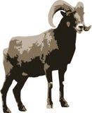 Vector a ilustração de uma ram fotos de stock royalty free