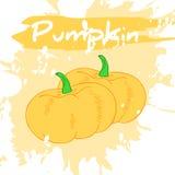 Vector a ilustração do desenho da mão do vegetal com etiqueta Fotografia de Stock