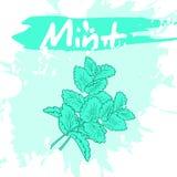 Vector a ilustração do desenho da mão do vegetal com etiqueta e artístico Imagens de Stock Royalty Free