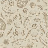 Vector a ilustração do fruto que tropical o teste padrão sem emenda pintou i Imagem de Stock Royalty Free