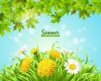 Vector a ilustração do fundo do verão com margaridas e dentes-de-leão imagens de stock royalty free