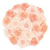 Vector a ilustração do ramalhete realístico, detalhado das rosas na cor do pêssego no fundo branco Fotografia de Stock