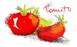 Vector a ilustração do tomate do esboço - corte tomates e salada Fotografia de Stock Royalty Free