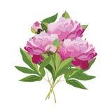 Vector a ilustração lisa do ramalhete de flores da peônia Imagens de Stock Royalty Free