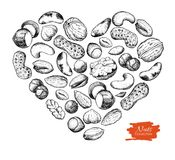 Vector a ilustração nuts tirada mão na forma do coração Imagens de Stock
