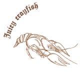 Vector a ilustração tirada mão do lápis das lagostas com etiqueta Imagem de Stock Royalty Free