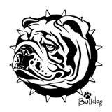 Vector a ilustração, tiragem de um cão do buldogue do inglês da raça Imagem de Stock
