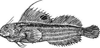 Deep-sea fish. Vector imafe of a deep-sea fish stock illustration
