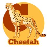 ABC Cartoon Cheetah. Vector image of the ABC Cartoon Cheetah Royalty Free Stock Images