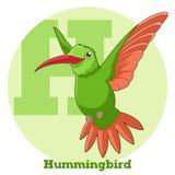 ABC Cartoon Hummingbird. Vector image of the ABC Cartoon Hummingbird Stock Image