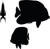 Vector Image - angelfish silhouette  on white background Royalty Free Stock Photography