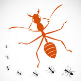 Vector image of an ant. On white background stock illustration