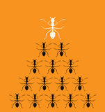 Vector image of an ants on orange background. Stock Image