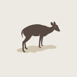 Vector image of an barking deer Royalty Free Stock Photography
