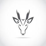 Vector image of an barking deer Stock Image