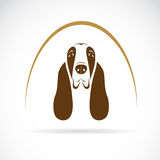 Vector image of an basset hound Stock Photo