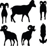 Vector Image - big horn sheep silhouette in walking pose isolated on white background Stock Photo