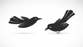 Vector image of an bird. On white background stock illustration