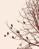 Birds on the rowan branches in winter Royalty Free Stock Image