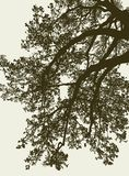 Vector image of the branches of a deciduous tree in summer stock photo