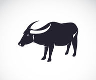 Vector image of an buffalo Stock Image