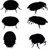 Vector Image - bug scarab attacking silhouette  on white background Stock Photography
