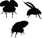 Vector Image - bug scarab early lift silhouette  on white background Royalty Free Stock Photo
