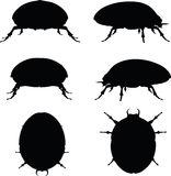 Vector Image - bug scarab silhouette  on white background Royalty Free Stock Photography
